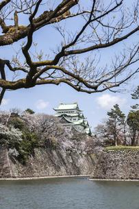 老木の枝越しに見る名古屋城風景の写真素材 [FYI04285419]