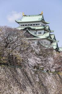 春の名古屋城石垣と天守の写真素材 [FYI04285420]