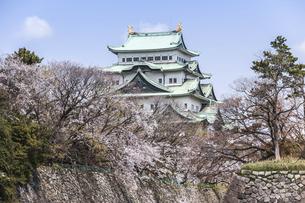 春の名古屋城天守の写真素材 [FYI04285421]