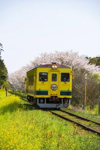 菜の花と桜咲く田舎を走るいすみ鉄道の写真素材 [FYI04285847]