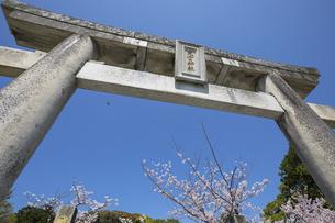 西公園 (福岡市) 光雲神社の鳥居と桜の写真素材 [FYI04286073]
