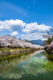 松本城お堀に咲く桜並木の写真素材 [FYI04286347]