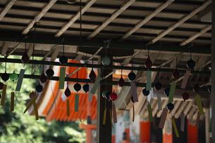 風鈴のシルエッットが涼しげな神社の境内の写真素材 [FYI04286353]