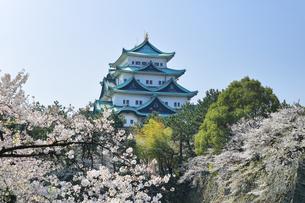春の名古屋城天守閣と桜の写真素材 [FYI04286747]