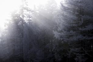 高ボッチ山 日本 長野県 岡谷市の写真素材 [FYI04286867]