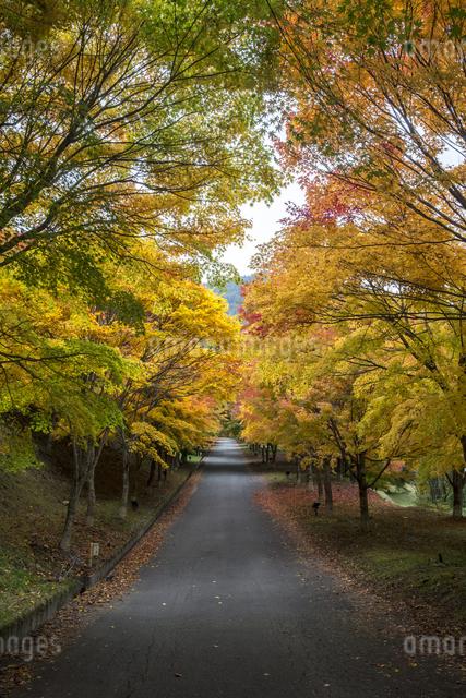 もみじ湖 日本 長野県 箕輪町の写真素材 [FYI04286890]