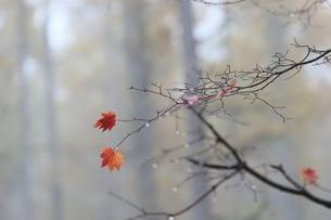 蓼科王滝展望台 日本 長野県 茅野市の写真素材 [FYI04286893]
