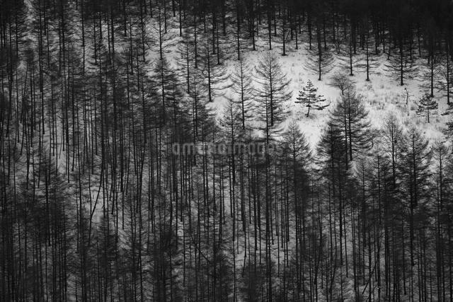 霧ヶ峰高原 日本 長野県 諏訪市の写真素材 [FYI04286910]