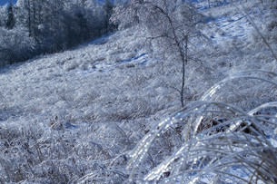 白樺湖 日本 長野県 茅野市の写真素材 [FYI04286917]