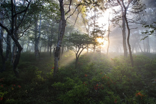 美ヶ原高原 日本 長野県 長和町の写真素材 [FYI04286934]