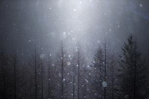 霧ヶ峰の写真素材 [FYI04286951]