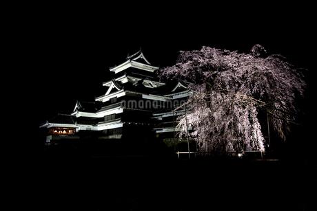 松本城 日本 長野県 松本市の写真素材 [FYI04286959]