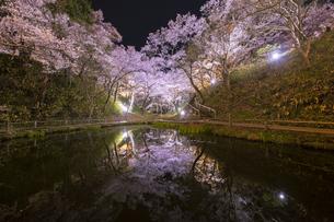 高遠城址公園 日本 長野県 伊那市の写真素材 [FYI04286960]