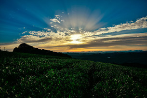 神野山の茶畑 日本 奈良県 山添村の写真素材 [FYI04286998]