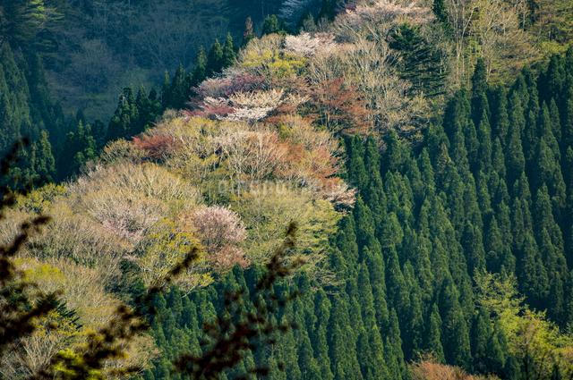 ナメゴ谷 国道309 64カーブポイント 日本 奈良県 上北山村の写真素材 [FYI04287006]