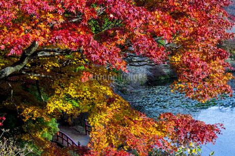 鳥見山 日本 奈良県 宇陀市の写真素材 [FYI04287010]