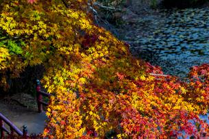 鳥見山 日本 奈良県 宇陀市の写真素材 [FYI04287012]