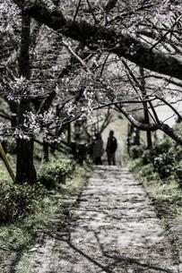 仏隆寺 日本 奈良県 宇陀市の写真素材 [FYI04287029]