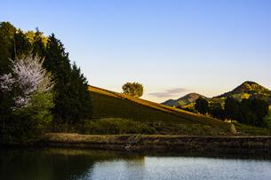茶畑 日本 奈良県 奈良市の写真素材 [FYI04287034]