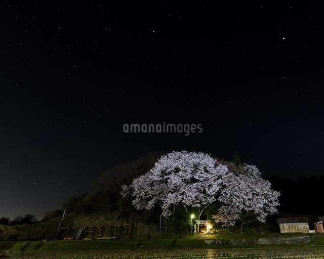 琴平神社 日本 奈良県 奈良市の写真素材 [FYI04287035]