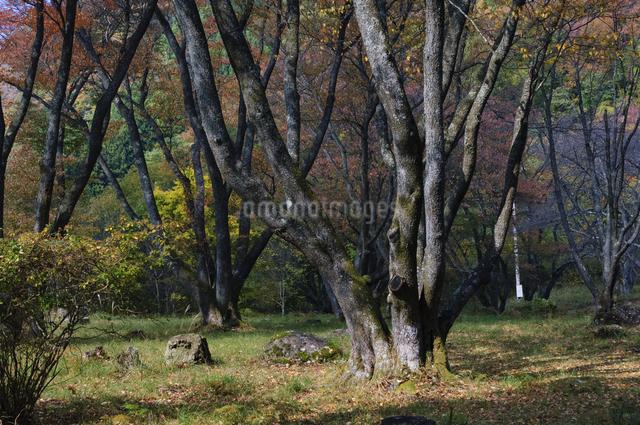 屏風岩公苑 日本 奈良県 曽爾村の写真素材 [FYI04287044]