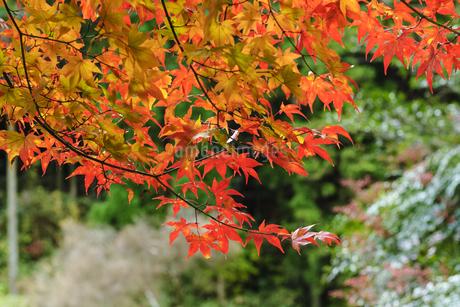 田口水分神社 日本 奈良県 宇陀市の写真素材 [FYI04287051]