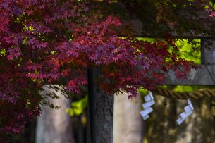 奈良県宇陀市室生区田口 日本 奈良県 宇陀市の写真素材 [FYI04287052]