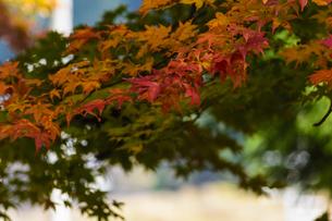 田口水分神社 日本 奈良県 宇陀市の写真素材 [FYI04287055]