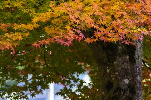 田口水分神社 日本 奈良県 宇陀市の写真素材 [FYI04287056]