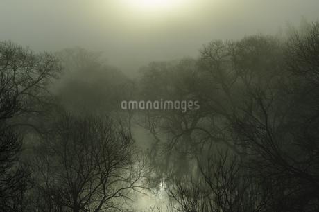 季節限定の水没林 日本 三重県 伊賀市の写真素材 [FYI04287065]