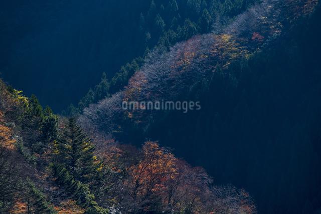 ナメゴ谷 日本 奈良県 上北山村の写真素材 [FYI04287069]