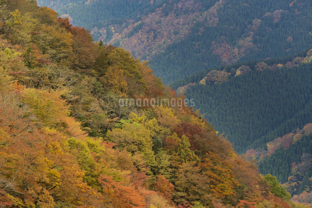 ナメゴ谷 日本 奈良県 上北山村の写真素材 [FYI04287070]
