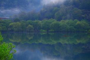 白川湖 水没林の写真素材 [FYI04287082]