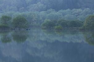 白川湖 水没林の写真素材 [FYI04287084]