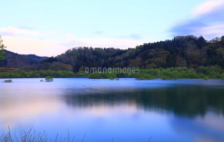 白川湖 水没林の写真素材 [FYI04287086]