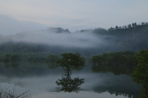 白川湖 水没林の写真素材 [FYI04287087]