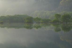 朝靄の白川湖の写真素材 [FYI04287088]