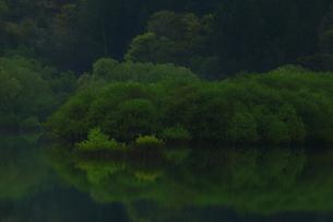 新緑の白川湖の写真素材 [FYI04287089]