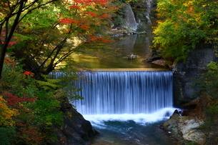 鳴子峡 日本 宮城県 大崎市の写真素材 [FYI04287139]