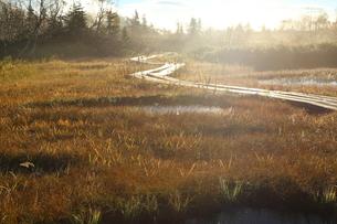 栂池自然園 日本 長野県 北安曇郡の写真素材 [FYI04287153]