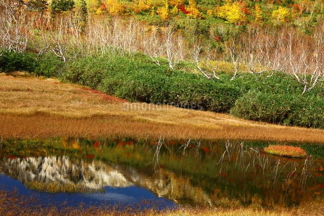 栂池自然園 日本 長野県 北安曇郡の写真素材 [FYI04287155]