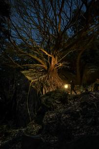 西平椿公園 日本 熊本県 天草市の写真素材 [FYI04287183]