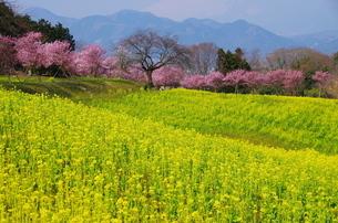 足柄上郡大井町篠窪 日本 神奈川県の写真素材 [FYI04287234]