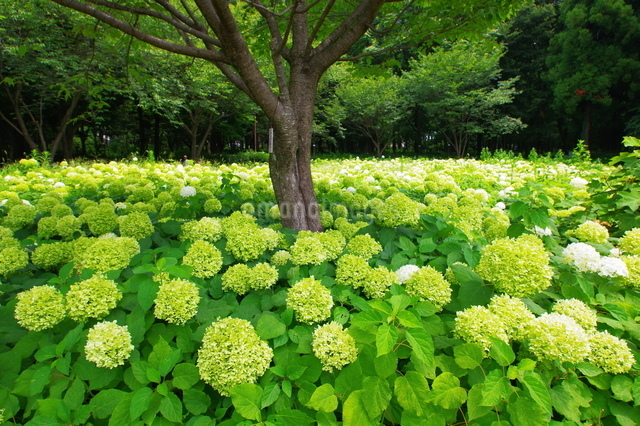 相模原市 日本 神奈川県の写真素材 [FYI04287237]