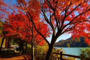 宮ケ瀬湖 日本 神奈川県 愛甲郡の写真素材 [FYI04287245]