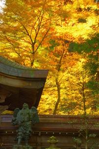 大雄山最乗寺 日本 神奈川県 南足柄市の写真素材 [FYI04287250]