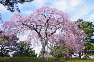 小室山公園 日本 静岡県 伊東市の写真素材 [FYI04287256]