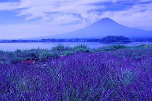 大石公園 日本 山梨県 富士河口湖町の写真素材 [FYI04287258]