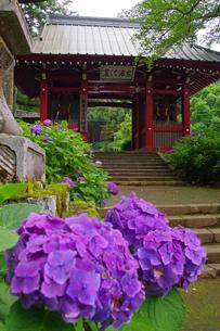 大雄山最乗寺 日本 神奈川県 南足柄市の写真素材 [FYI04287259]