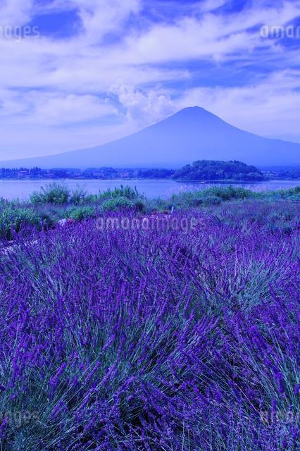 大石公園 日本 山梨県 富士河口湖町の写真素材 [FYI04287260]